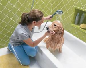 Comment liminer les puces de son chien les v t rinaires - Comment tuer les puces de chien ...