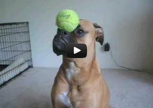 video-chien-1
