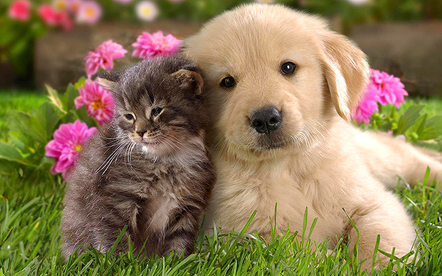 animal-compagnie-chat-chien-ensemble2