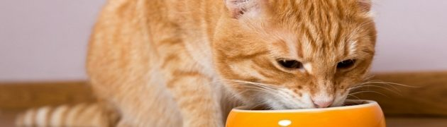 bien-nourrir-son-chat