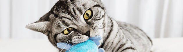 jouet-pour-chat