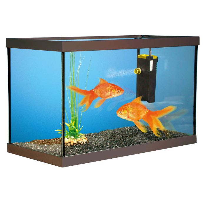 Pourquoi adopter un poisson rouge comme animal de for Ou placer aquarium poisson rouge