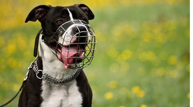 assurance chiens elevage